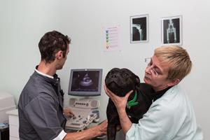 Echographie vétérinaire à Yutz
