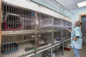 Chatterie clinique vétérinaire Arc en Ciel