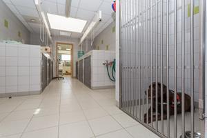 Chenil clinique vétérinaire de Yutz